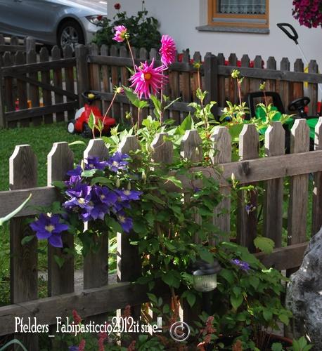 Flowers Pfelders Passeiertal