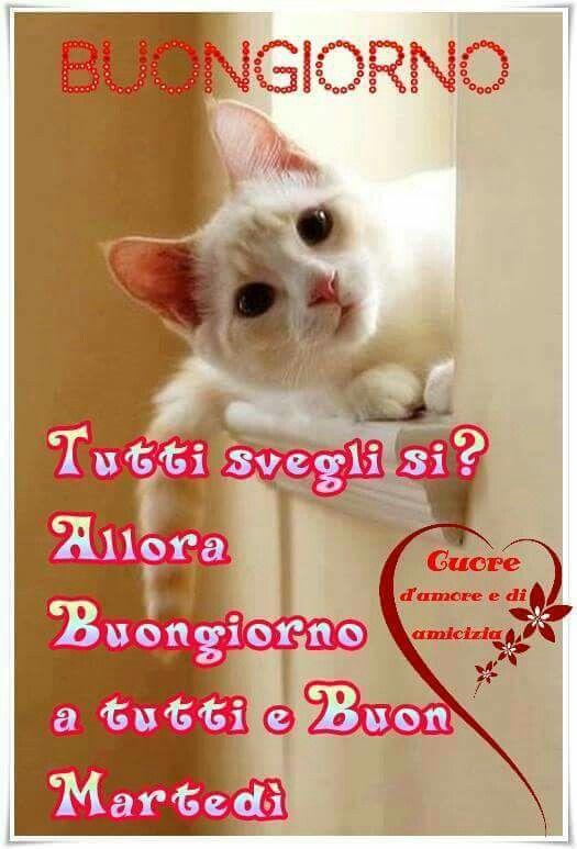 141 best buon marted images on pinterest flowers and for Immagini divertenti buongiorno venerdi