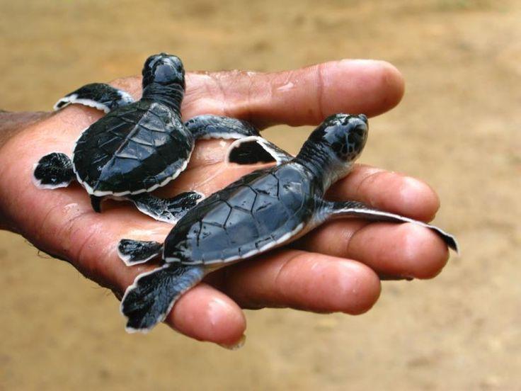 dia de la tortuga 3