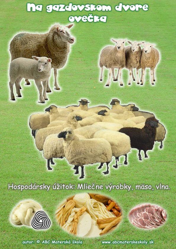 gazdovský dvor ovca