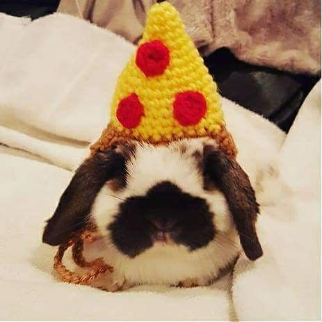 Don't forget about dressing your pet this Halloween! Look at this cute little slice of pizza! 🐰🐰 🍕🍕🍕   www.etsy.com/shop/eternallightshop  Photo by: @bunita_bunny