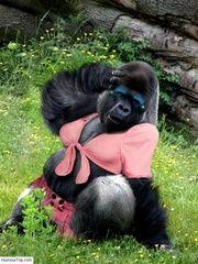 Humour Singes. Photos d'humour de chimpanzés blagueurs, images drôles de macaques marrants, gifs animés comiques de singes, gags marrants sur les primates, photographies rigolotes sur des singes bizarres, bonobos qui ressemblent à l'homme