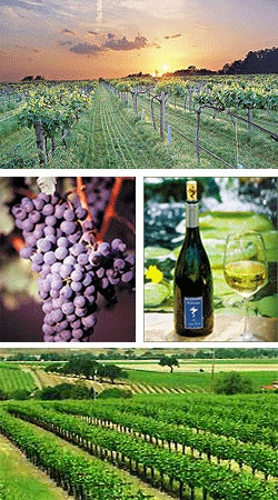 Livermore wineries,ca...Once once a favorite home...now a favorite place to visit