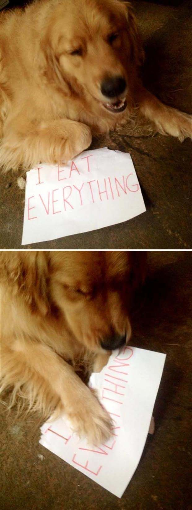 99 Of The Funniest Pinterest Pictures We've Ever Seen