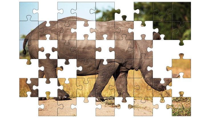 Free Jigsaw Puzzle Online - South African Rhino  #Game #JigsawPuzzle #Puzzle #jigsaw