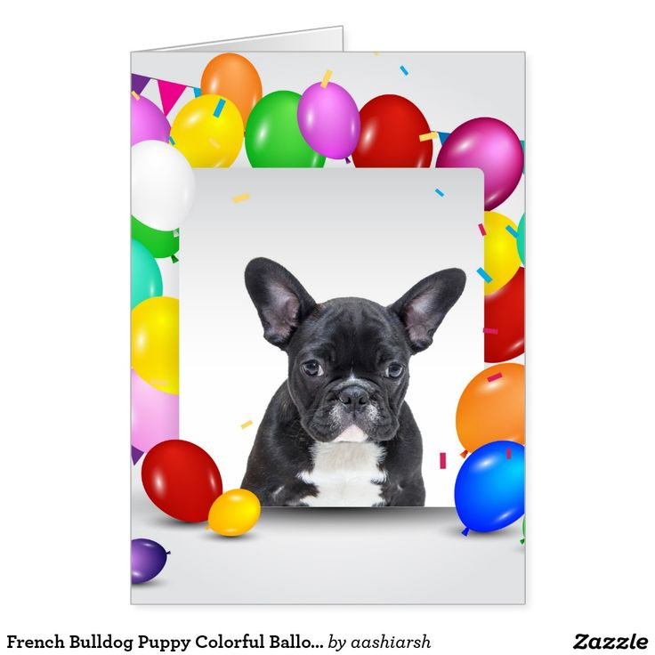 #French #Bulldog #Puppy Colorful #Balloons #Birthday #Card #animal #dog #puppy