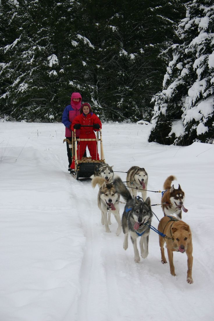 135 best dog sledding images on pinterest sled bucket and sled dogs