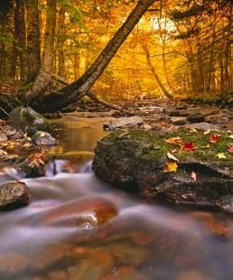 Golden fall (autumn) forest with flwoing water stream in Cape Breton Highlands National Park, Nova Scotia, Canada.