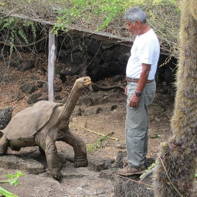 The Best Giant Tortoise Ideas On Pinterest Cute Tortoise - Jonathan tortoise mind blowing 182 years old