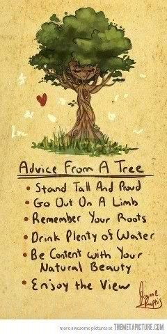 We have so much to learn from trees!!!