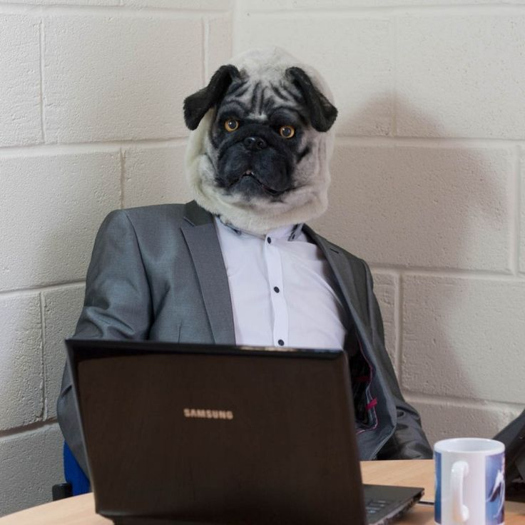 Mr Pug. We all love pugs and now you can become one. Or nearly.... #pug #pugmask #mask #halloween