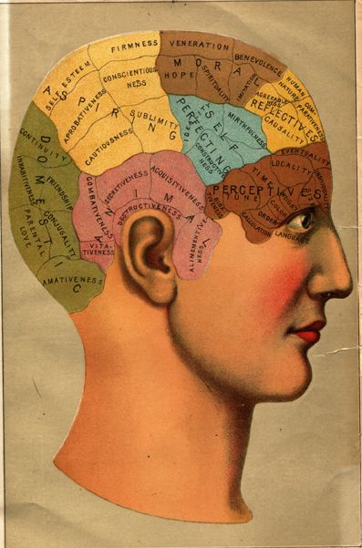 """phrenology"": Medical Books, Medical Anatomy, Writing Tips, The Brain, Art Books Medical, Healthy Mind, Brain Maps, Medical Schools, Medicine Doctors"