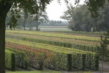 Stora häckelement (upp till 200x100x40 cm)  Stora häckelement är fullvuxna häckelement som kan planteras överallt i trädgården. Med dessa element kan du få en tät häck som direkt skapar skydd från insyn. Det finns många fördelar med färdiga häckar.