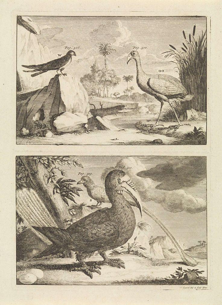 Jan Goeree | Vier exotische vogels, Jan Goeree, 1650 - 1731 | Een prent van twee platen met vier exotische vogels in het wild. Boven een waadvogel en een zangvogel. Onder een paradijsvogel en een neushoornvogel.