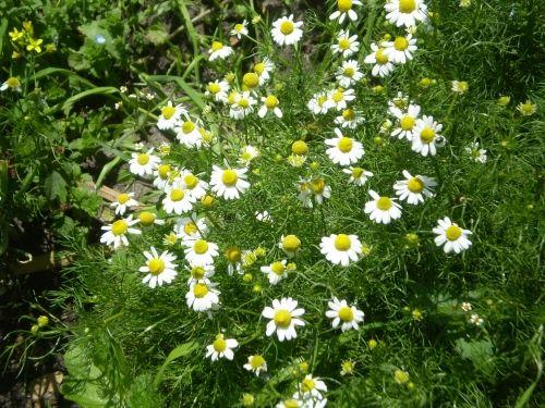 25 best ideas about plantas para exterior on pinterest - Plantas de jardin exterior ...