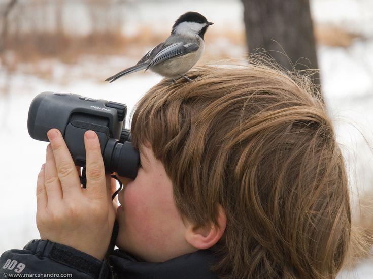 Experto en observación de aves