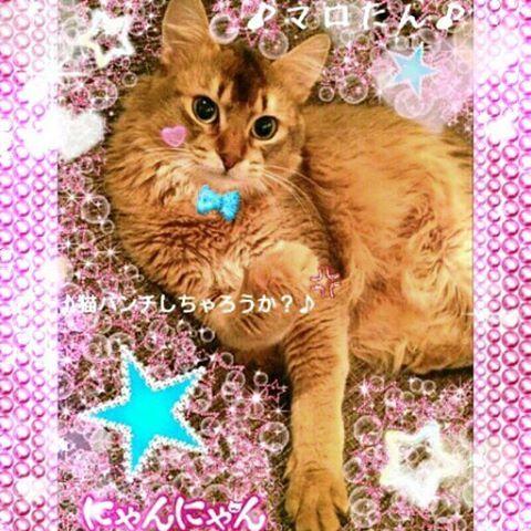猫パンチ👊しちゃろうか?😸 #シド #マオ #愛猫 #マロくん #ソマリ #にゃんにゃん #にゃんすたぐらむ