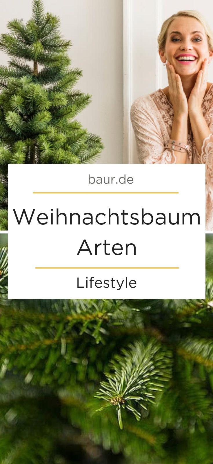 Weihnachtsbaum Fällen.Ein Weihnachtsbaum Für Alle Fälle Oh Tannenbaum Wie Grün Sind