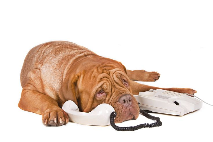 be prepared for emergencies- pet poison hotline