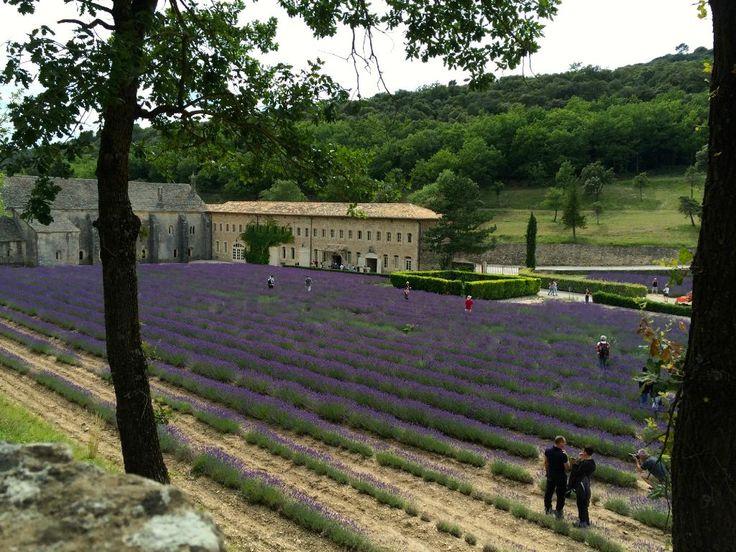 ラベンダー畑で有名なセナンク修道院 - Senanque Abbeyの口コミ – トリップアドバイザー