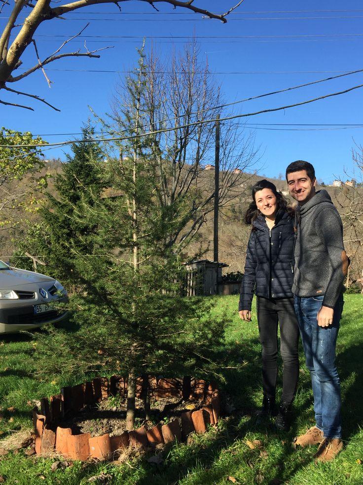 Fatsa- Çocuklarım ve Ağacımız