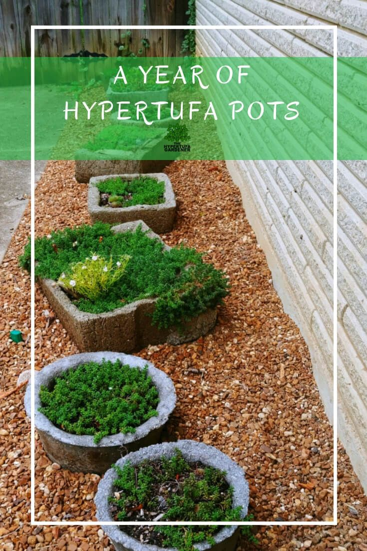 End Of Year Hypertufa Pots Rewind Review Succulent Gardening