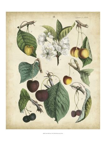 Fruits & Vegetables Picture at AllPosters.com
