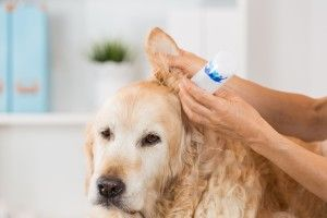 Know if Your Pet has Allergies  How to know if your pet has allergies. Can you tell if your pet has allergies? If you are a pet owner, it is mandatory, if not incredibly crucial, for you to keep your pet's health in check. If you already keep the most viable area for your pet and it still seems to look sick, it may possibly be suffering from some allergies. Here's how to know if your pet has allergies and what to do about them: