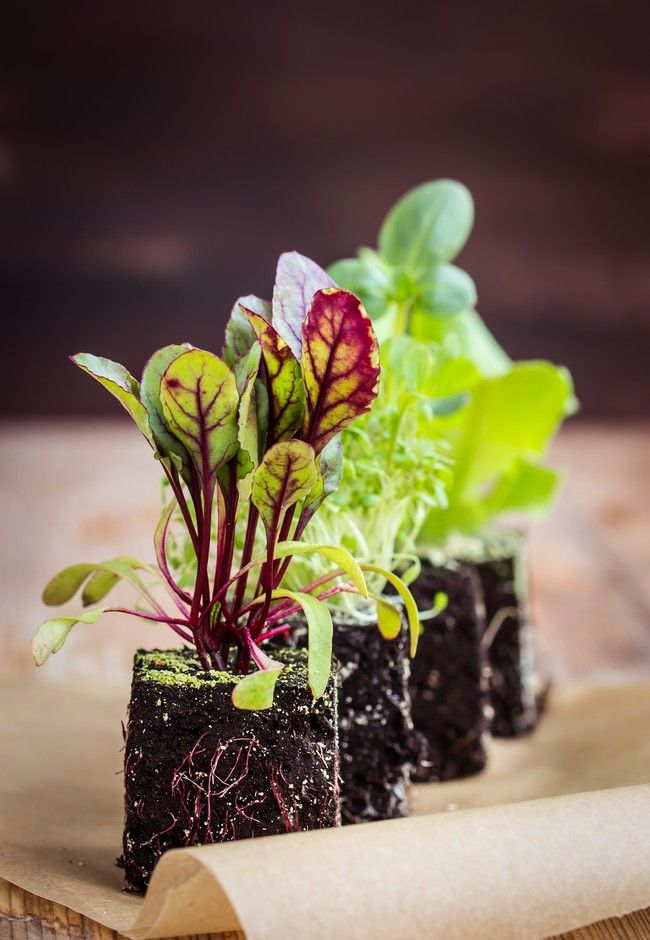 Beginner's guide: your home veggie garden | Good Magazine