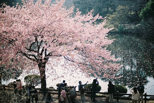 Pin By Carmen Lancha Montes On Lugares De Ensueno Scenery Magical Tree Beautiful Nature