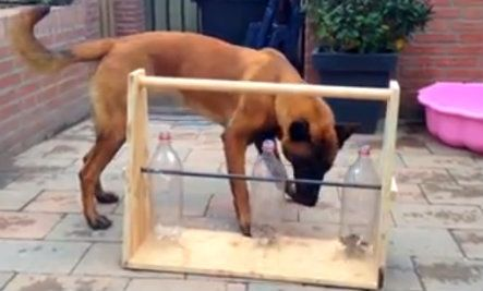 TOYS AND GAMES: Creative Homemade Toy Keeps This Dog Happy (Video)