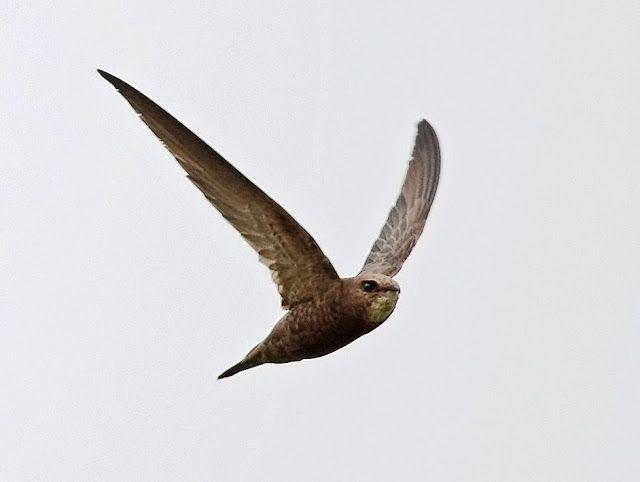 3141 best BIRDS images on Pinterest | Beautiful birds, Exotic birds ...