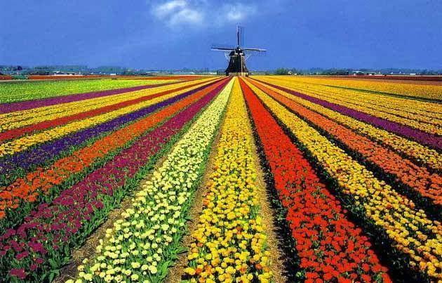 """Che cosa c'è di più rilassante che perdersi in qualche bellissimo giardino, ricco di profumi, di colori, in giro per il mondo? Godere della vista di un meraviglioso giardino significa """"…"""