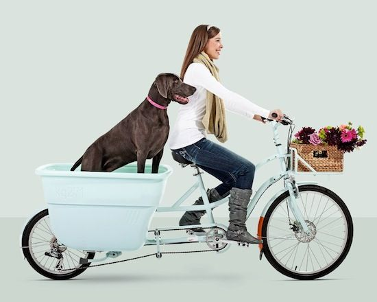 Dog Bike!  What about kids, groceries, and books from the library??  I would fall over on our hill...