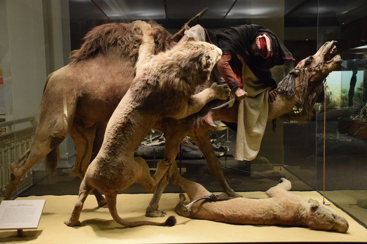 Pittsburgh Natural History
