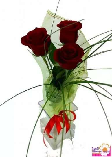 один цветок в подарок: 2 тыс изображений найдено в Яндекс ...