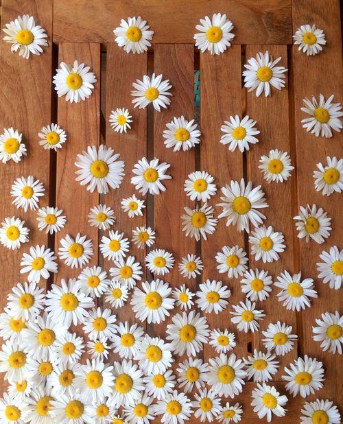 Slowly we unfurl, as lotus flowers.