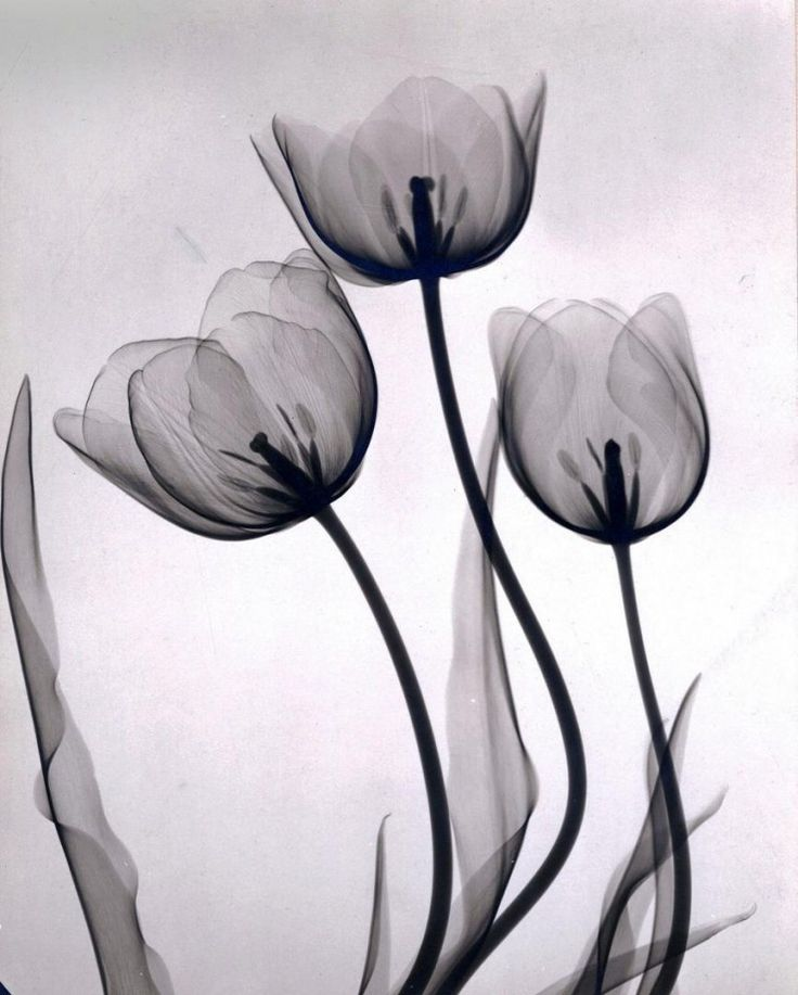 xray-fleur-02