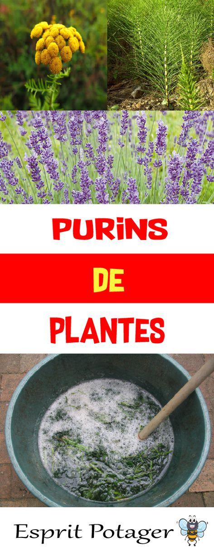 Purins De Plantes : Fabrication, Utilisation Et Conservation   Esprit  Potager