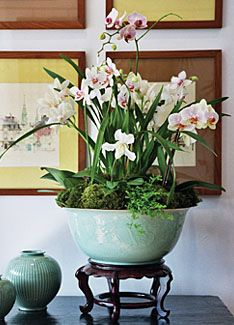 A little moss and some tiny ferns make a fantastic display for this collection of orchids.