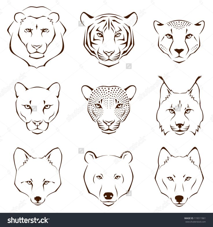 stock-photo-set-of-simple-line-illustrations-showing-different-facial-features-of-wild-animals-lion-tiger-119511961.jpg (1500×1600)