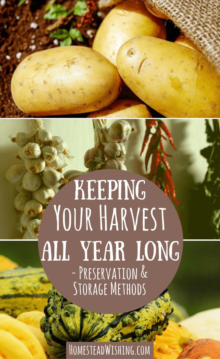 Preservation & storage methods for homegrown produce such as potatoes, onions, garlic,pumpkins and more! Keeping Your Harvest All Year long.
