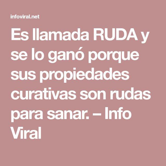 Es llamada RUDA y se lo ganó porque sus propiedades curativas son rudas para sanar. – Info Viral