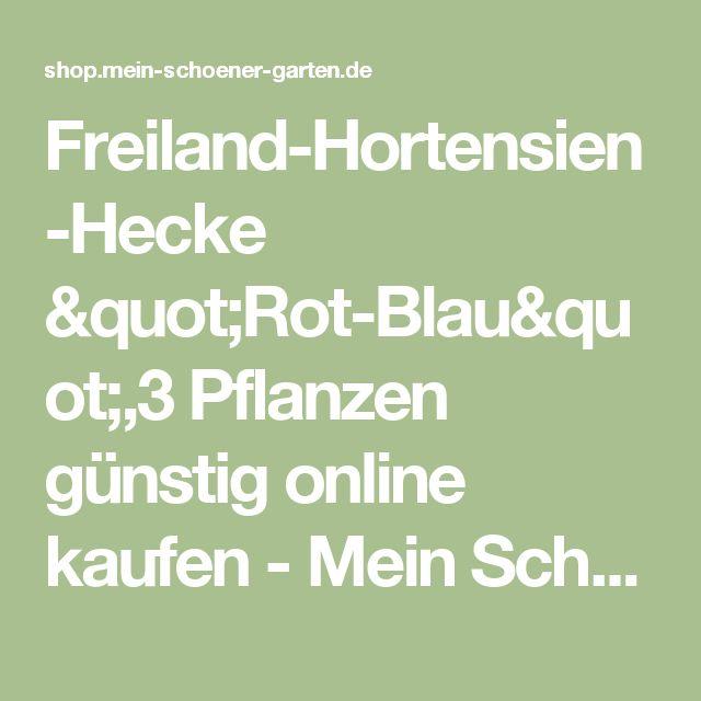 Die besten 25+ Hortensien kaufen Ideen auf Pinterest Pflanzen - abo mein schoner garten