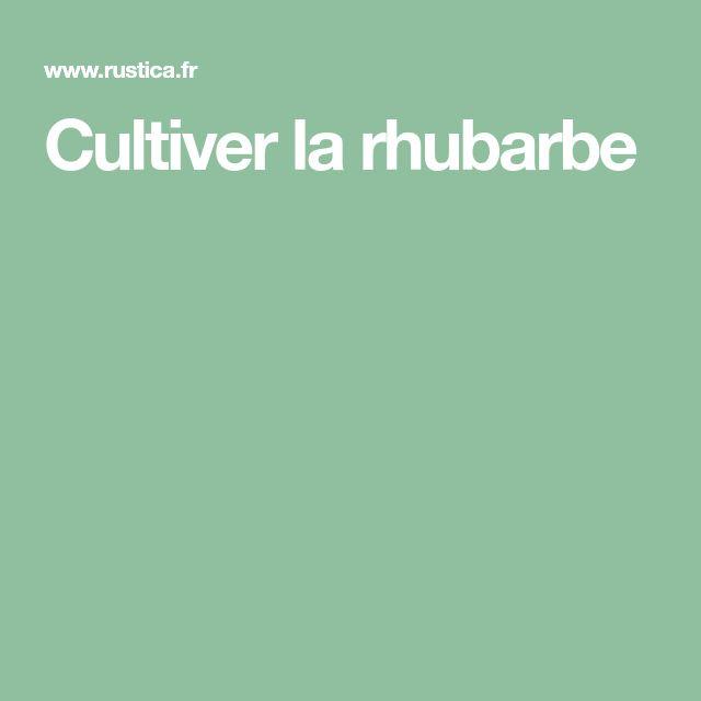Cultiver la rhubarbe
