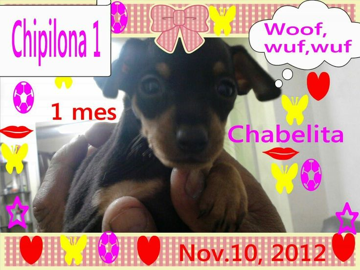 The day we brought home Chabelita .