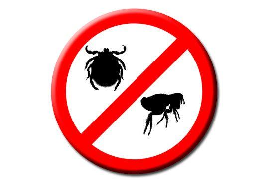 Eliminación garrapatas, pulgas y chinches Enesa Continental  #garrapatas #pulgas #chinches