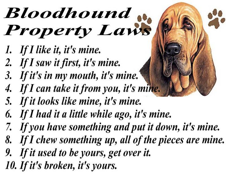 BLOODHOUNDS RULE & BLOODHOUND RULES !!