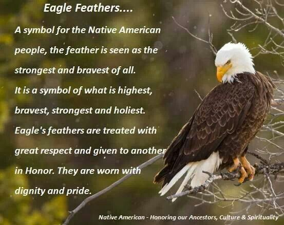 47 Best Majestic Eagles Images On Pinterest My Heart Families And