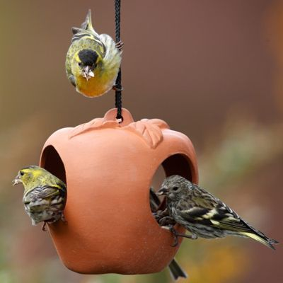 Terracotta Bird Feeders Drinkers And Bird Baths For Sale